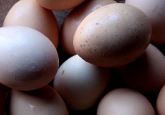 Ovos (Letícia Massula para Cozinha da Matilde)