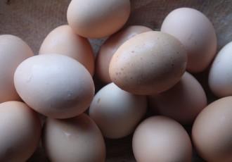 Ovos inteiros (Letícia Massula)