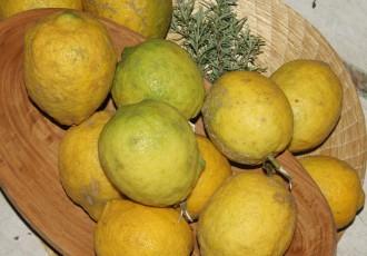 Sicilianos (Letícia Massula)