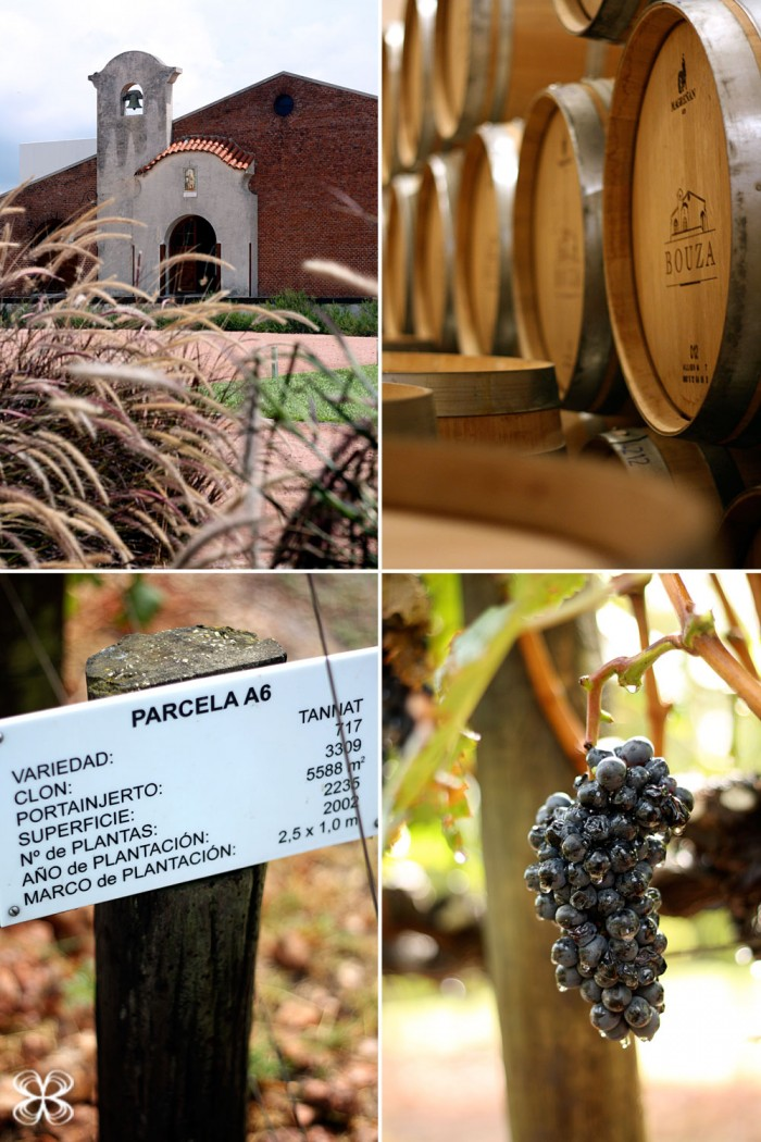 vinicola-bouza-montevideo-uruguay-(leticia-massula-para-cozinha-da-matilde)