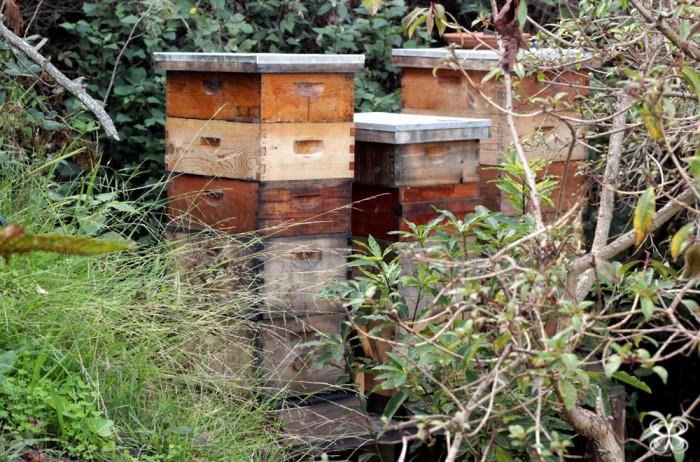 honeycomb-colmeias-san-francisco-california-(leticia-massula-para-cozinha-da-matilde)