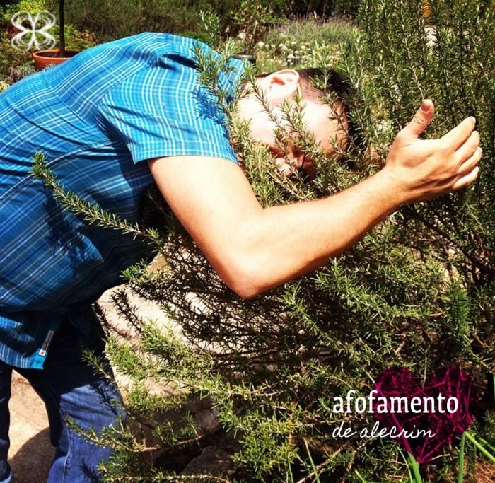 afofamento-de-alecrim-no-sabor-de-fazenda-herbario-(leticia-massula-para-cozinha-da-matilde)