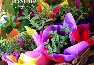 cestas-de-ervas-do-sabor-de-fazenda-(leticia-massula-para-cozinha-da-matilde)