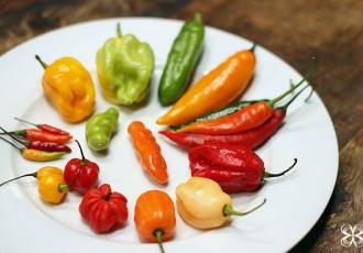 2-pimentas-capsicum-(leticia-massula-para-cozinha-da-matilde)
