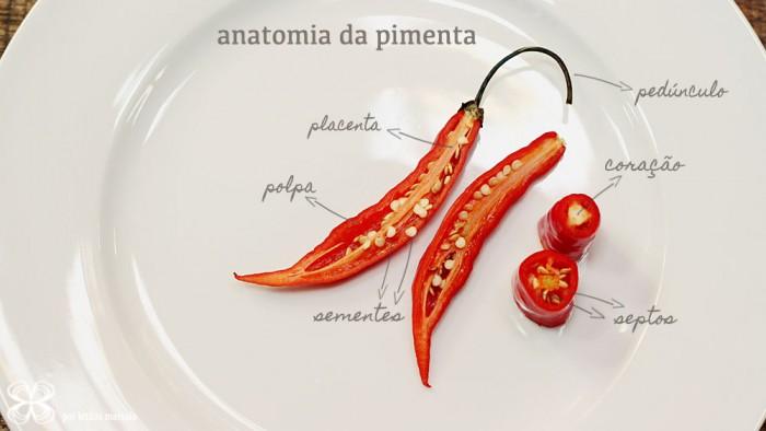 capsicum-anatomia-da-pimenta-(leticia-massula-para-cozinha-da-matilde)