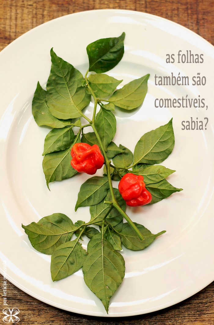 capsicum-pimentas-folhas-comestiveis-(leticia-massula-para-cozinha-da-matilde)