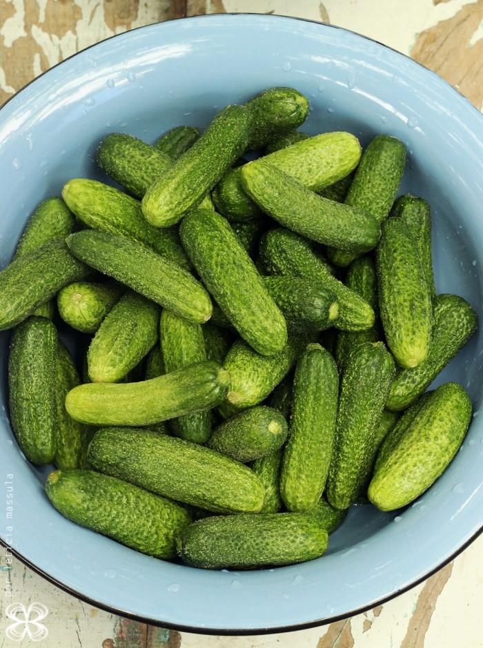 pepinos-para-pickles-(leticia-massula-para-cozinha-da-matilde)