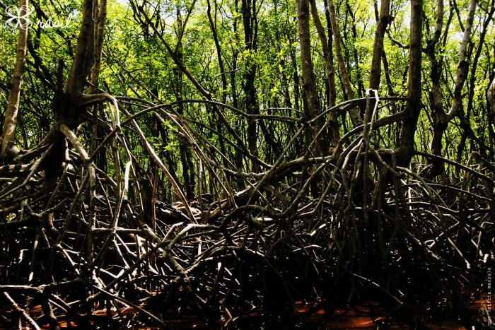 mangue-do-brasil-2-(leticia-massula-para-cozinha-da-matilde)