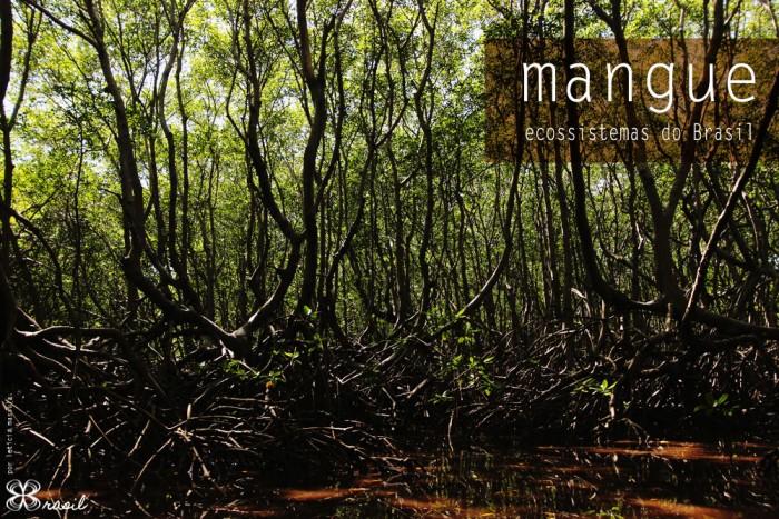 mangue-ecossistemas-do-brasil-(leticia-massula-para-cozinha-da-matilde)