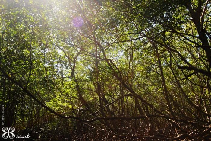mangue-no-brasil-(leticia-massula-para-cozinha-da-matilde)