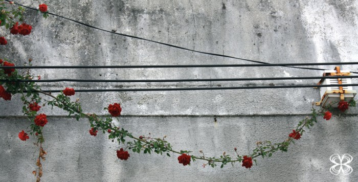 rosas-em-montevideo-poesia-concreta-(leticia-massula-para-cozinha-da-matilde)