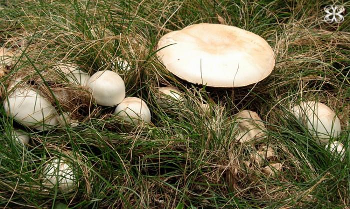 mushroom-cogumelos-san-francisco-californa-(leticia-massula-para-cozinha-da-matilde)