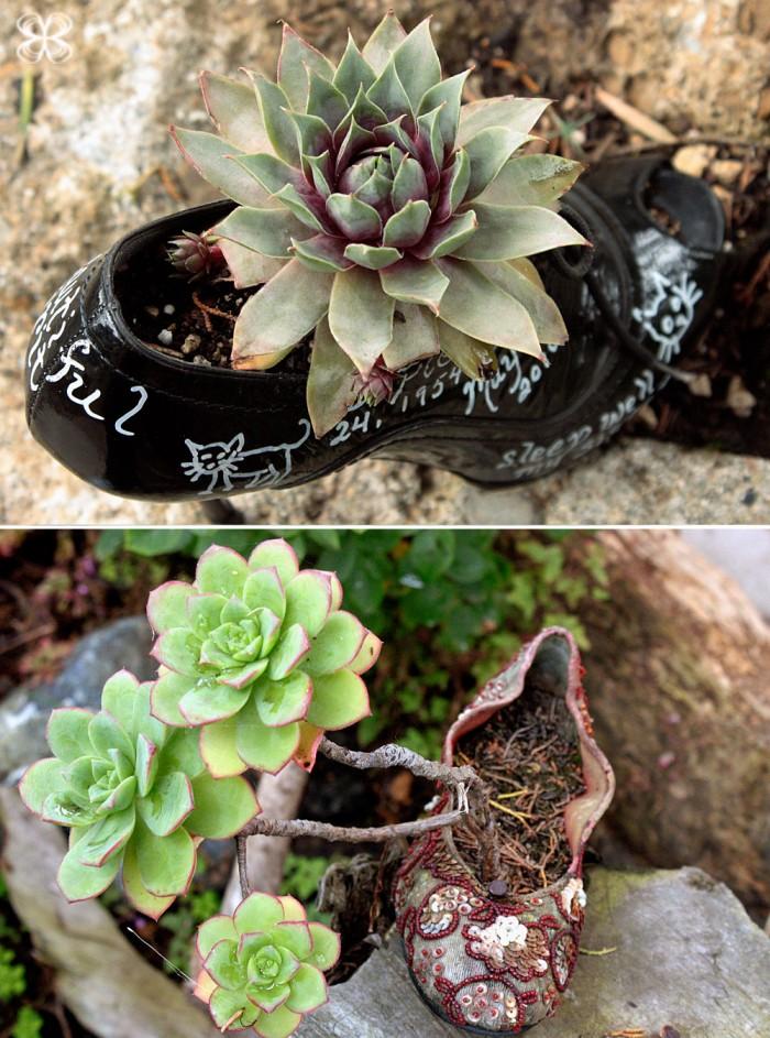 shoe-garden-san-francisco-jardim-no-sapato-(leticia-massula-para-cozinha-da-matilde)