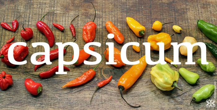 2-capsicum-rainbow-(leticia-massula-para-cozinha-da-matilde)